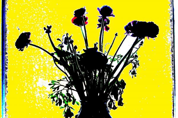 flowers-silhouette-a2B63A7C0-1315-778E-3EE6-51F785031232.jpg
